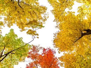 Look up at trees during fall